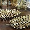 Centro de Mesa Folha Palmeira Ouro 70x33x5cm M