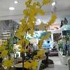 Orquídea Chuva Ouro Amarela Haste 135cm